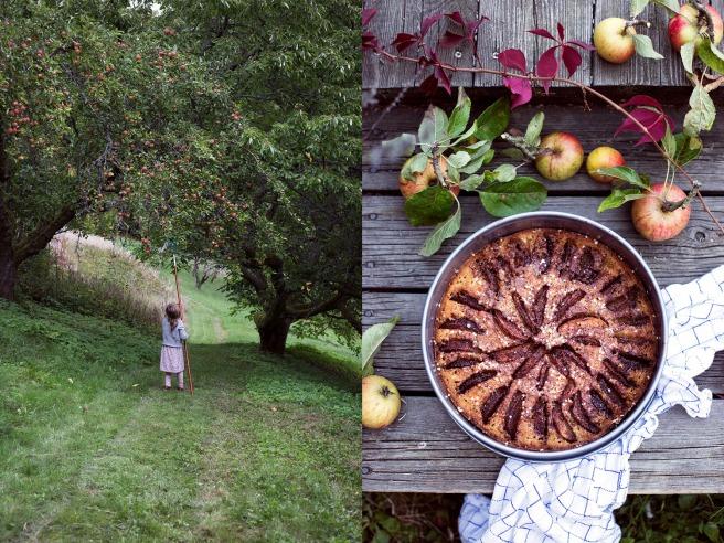 Äppelkaka med kardemumma och citron. Ta till vara.